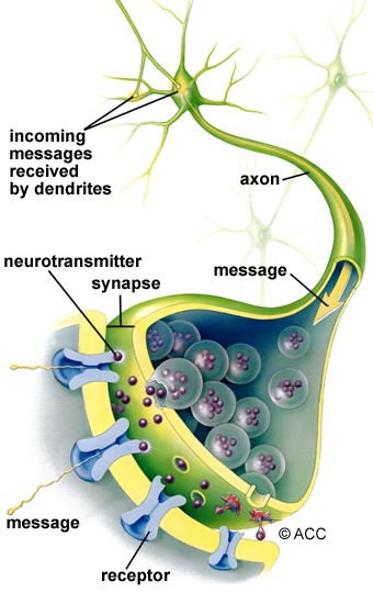 Illustration of neurons, dendrites and axon